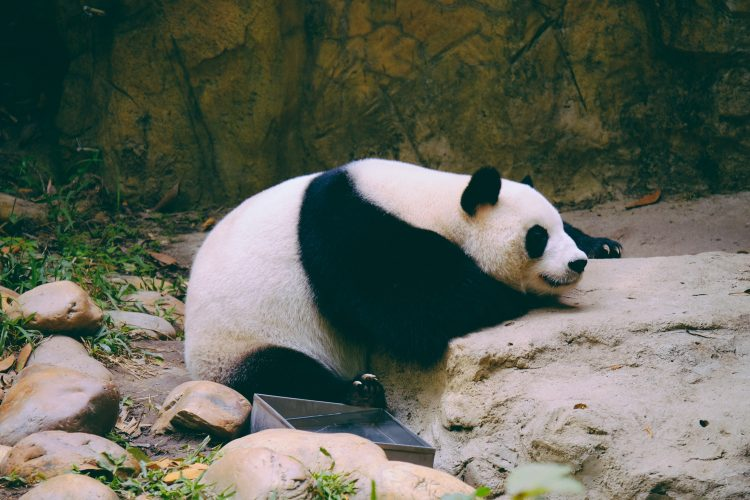 Referral Reward: Adopt a Panda with WWF